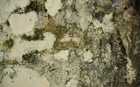 moisissures sur les murs