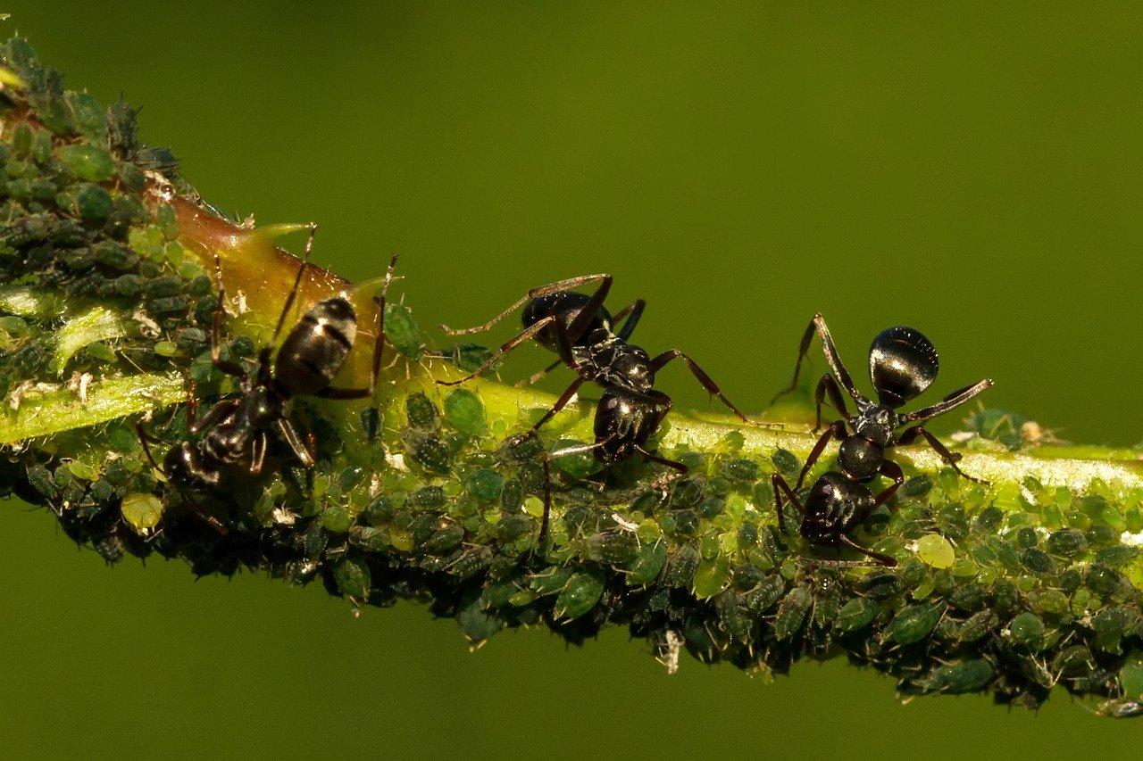 Eloigner Les Fourmis Au Jardin comment se débarrasser des fourmis dans son jardin ?