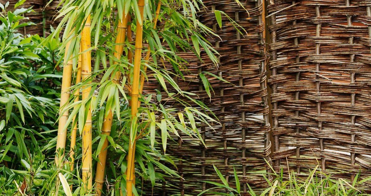 décoration bambou